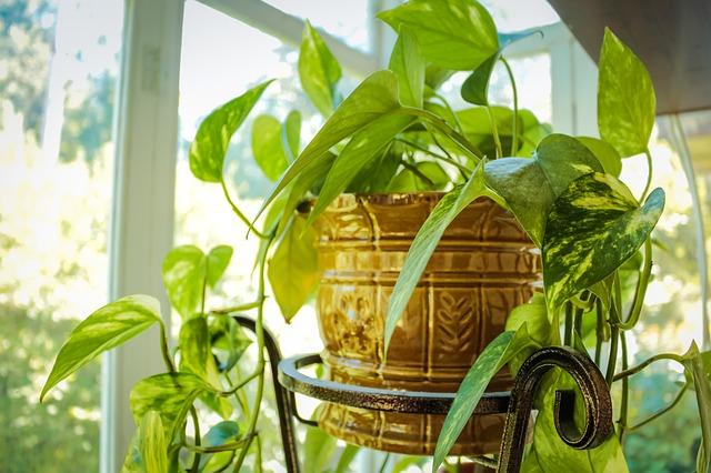 Co pěstovat v ložnici?